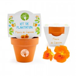Kit de plantation Iria